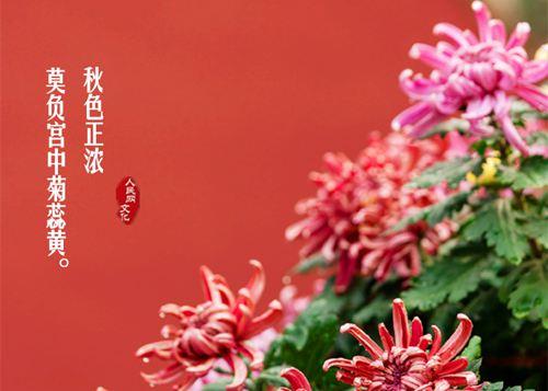 国庆假期赏京城秋色故宫重现紫禁城菊花盛景