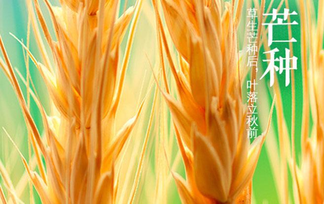 芒种——仲夏的开始,忙着种下希望