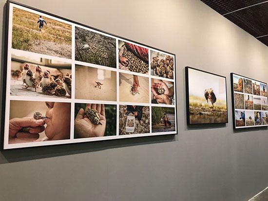 摄影人姜信和:艺术应该给生命让路