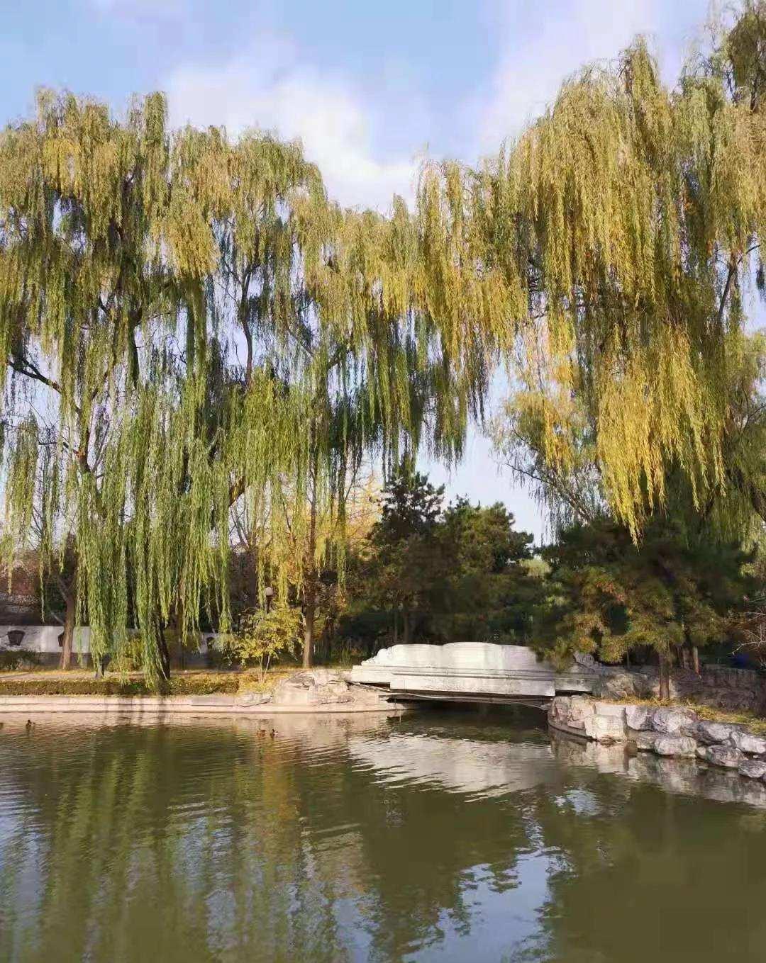 爱上掠燕湖的秋色