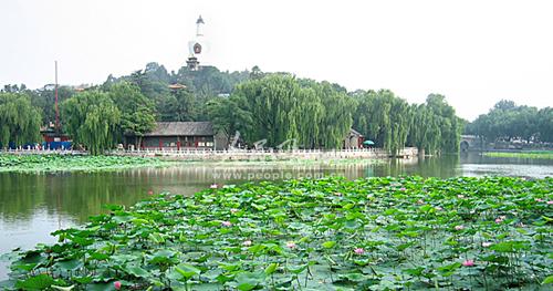 与红莲种植在北海南门水域内,直至1957年形成公园南门荷花池的景观
