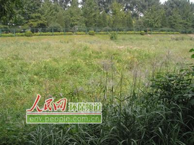 壁纸 草 成片种植 风景 绿色 植物 种植基地 桌面 400_300
